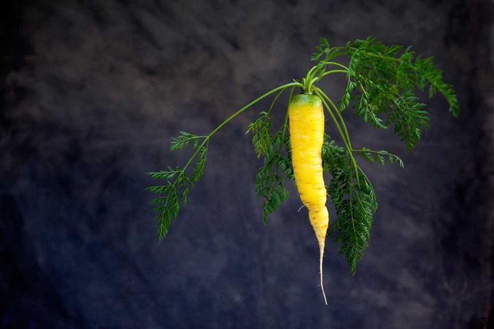 枯萎的蔬菜